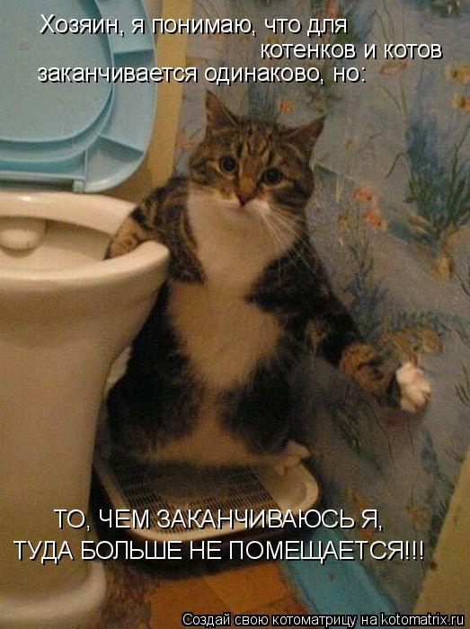 Котоматрица: Хозяин, я понимаю, что для котенков и котов заканчивается одинаково, но: ТО, ЧЕМ ЗАКАНЧИВАЮСЬ Я, ТУДА БОЛЬШЕ НЕ ПОМЕЩАЕТСЯ!!!