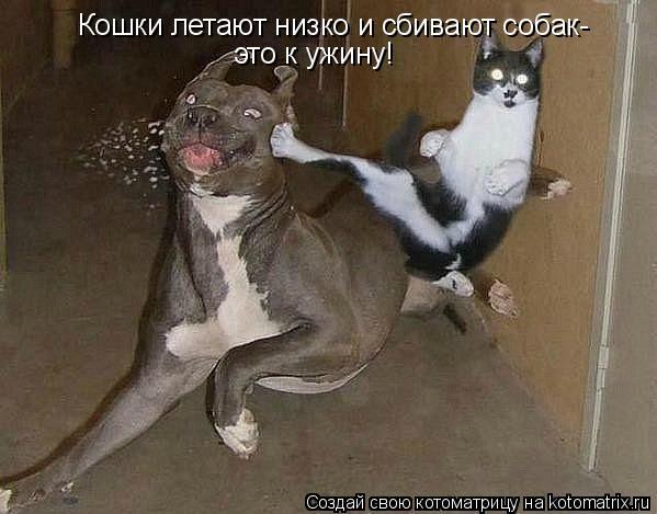 Котоматрица: Кошки летают низко и сбивают собак- это к ужину!