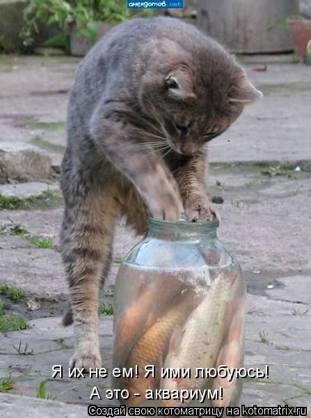 Котоматрица: Я их не ем! Я ими любуюсь! А это - аквариум!