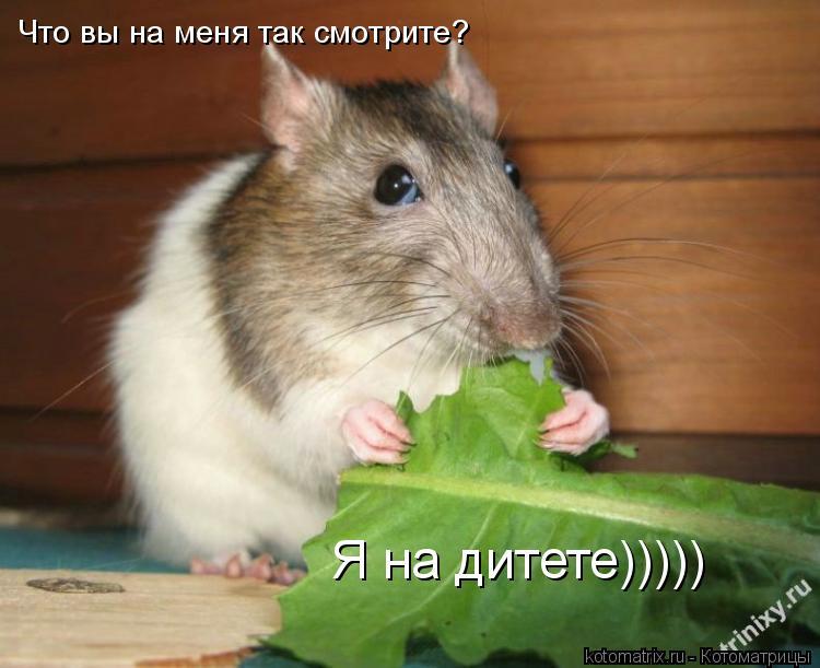 Котоматрица: Что вы на меня так смотрите? Я на дитете)))))