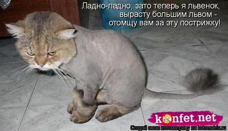 Котоматрица: Ладно-ладно, зато теперь я львенок, вырасту большим львом - отомщу вам за эту пострижку!