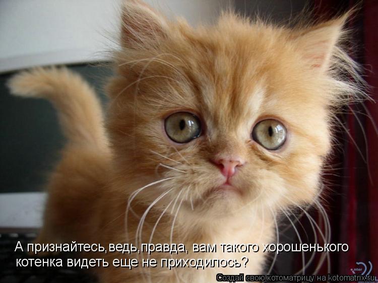 Котоматрица: А признайтесь,ведь,правда, вам такого хорошенького котенка видеть еще не приходилось?