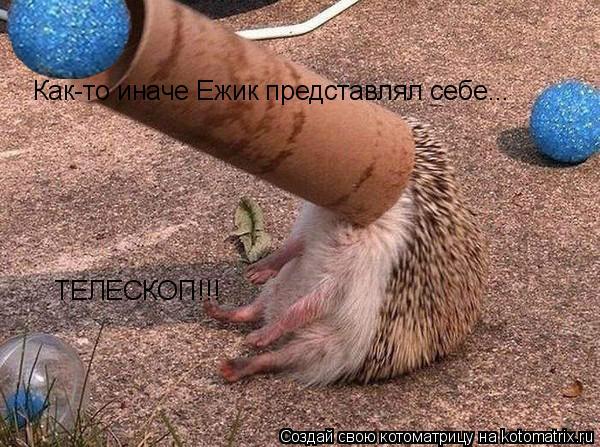 Котоматрица: Как-то иначе Ежик представлял себе... ТЕЛЕСКОП!!!
