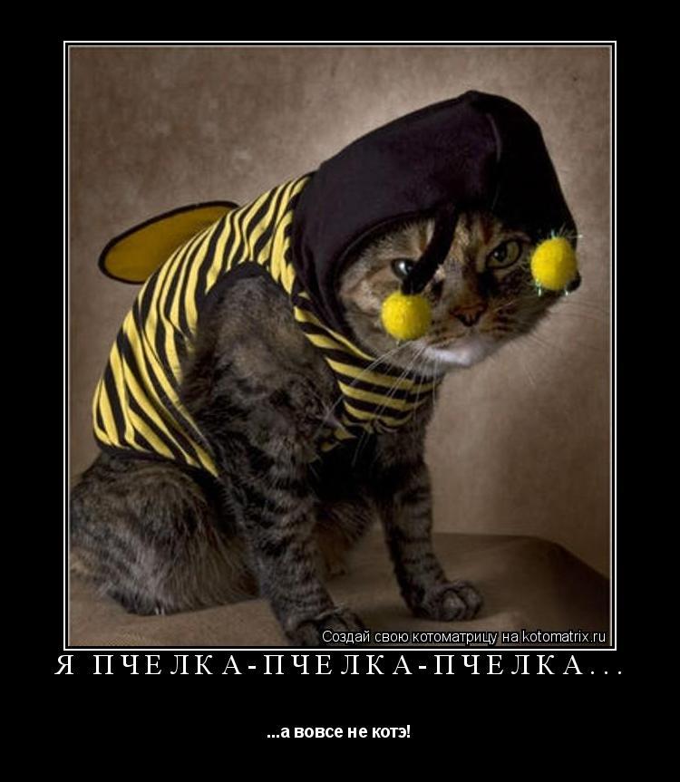 Котоматрица: Я пчелка-пчелка-пчелка... ...а вовсе не котэ!