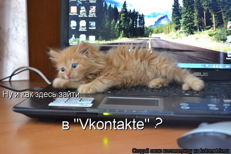 """Котоматрица: Ну и как здесь зайти в """"Vkontakte"""" ?"""
