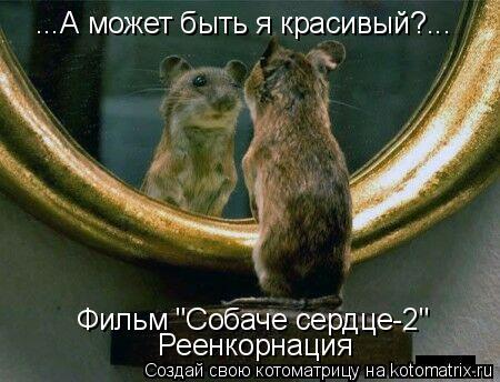 """Котоматрица: ...А может быть я красивый?... Фильм """"Собаче сердце-2"""" Реенкорнация"""