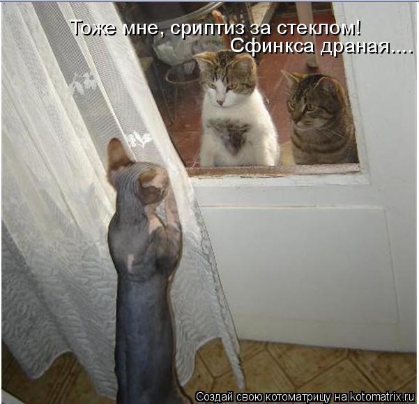 Котоматрица: Тоже мне, сриптиз за стеклом! Сфинкса драная....
