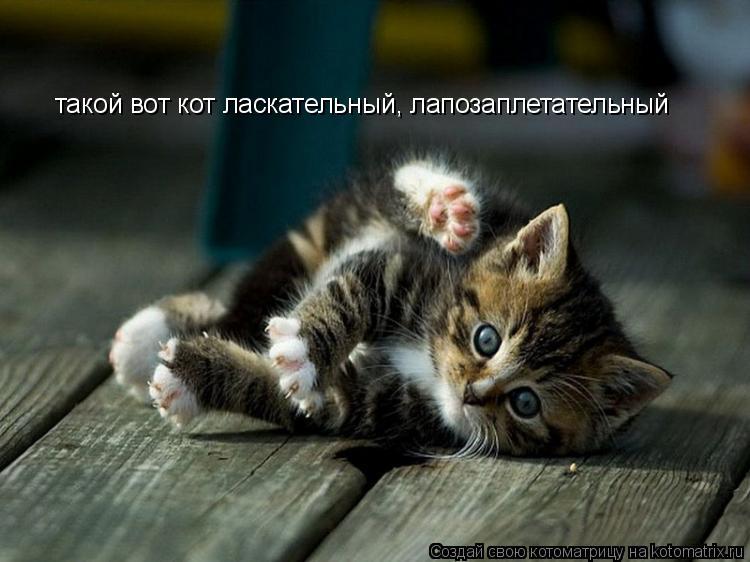 Котоматрица: такой вот кот ласкательный, лапозаплетательный