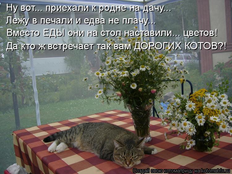 Котоматрица: Ну вот... приехали к родне на дачу... Лежу в печали и едва не плачу... Вместо ЕДЫ они на стол наставили... цветов! Да кто ж встречает так вам ДОРОГ