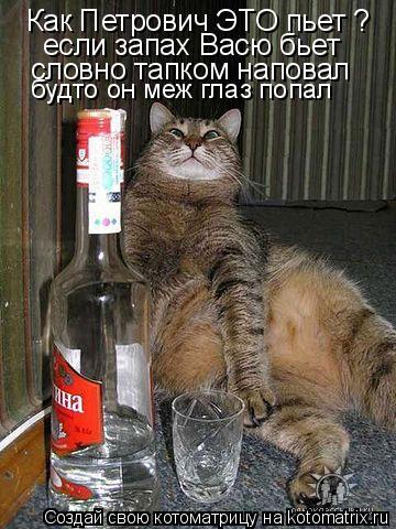Котоматрица: Как Петрович ЭТО пьет ? если запах Васю бьет словно тапком наповал будто он меж глаз попал
