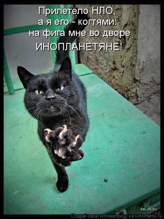 Котоматрица - Прилетело НЛО, а я его - когтями: на фига мне во дворе ИНОПЛАНЕТЯНЕ!