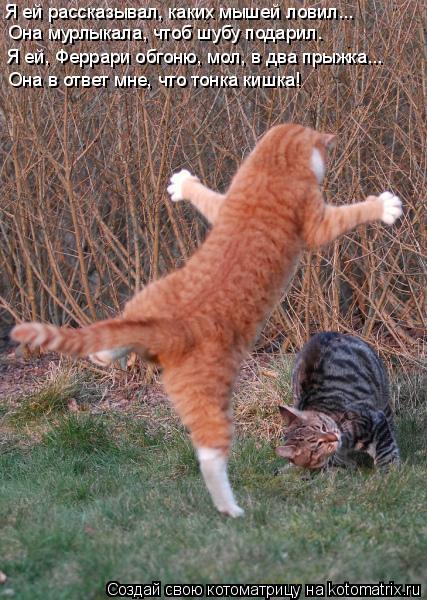 Котоматрица: Я ей рассказывал, каких мышей ловил... Она мурлыкала, чтоб шубу подарил. Я ей, Феррари обгоню, мол, в два прыжка... Она в ответ мне, что тонка киш