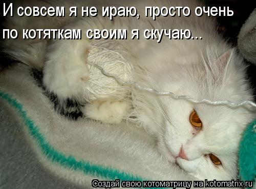 Котоматрица: И совсем я не ираю, просто очень по котяткам своим я скучаю...