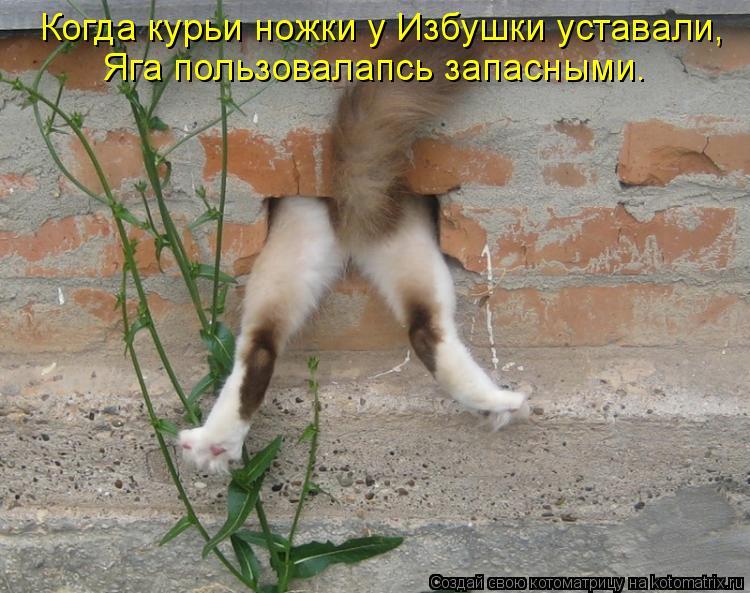 Котоматрица: Когда курьи ножки у Избушки уставали, Яга пользовалапсь запасными.