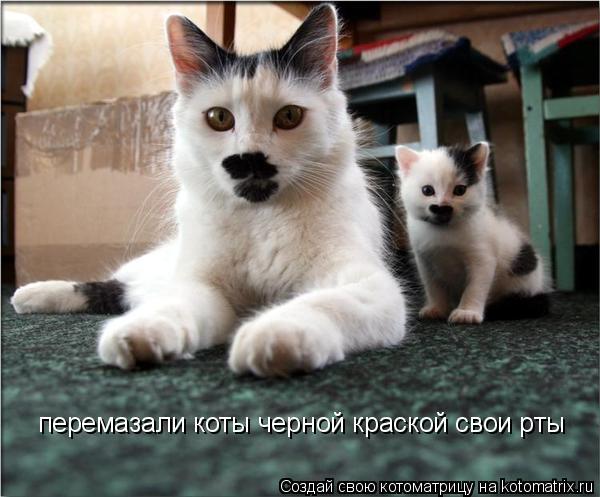 Котоматрица: перемазали коты черной краской свои рты