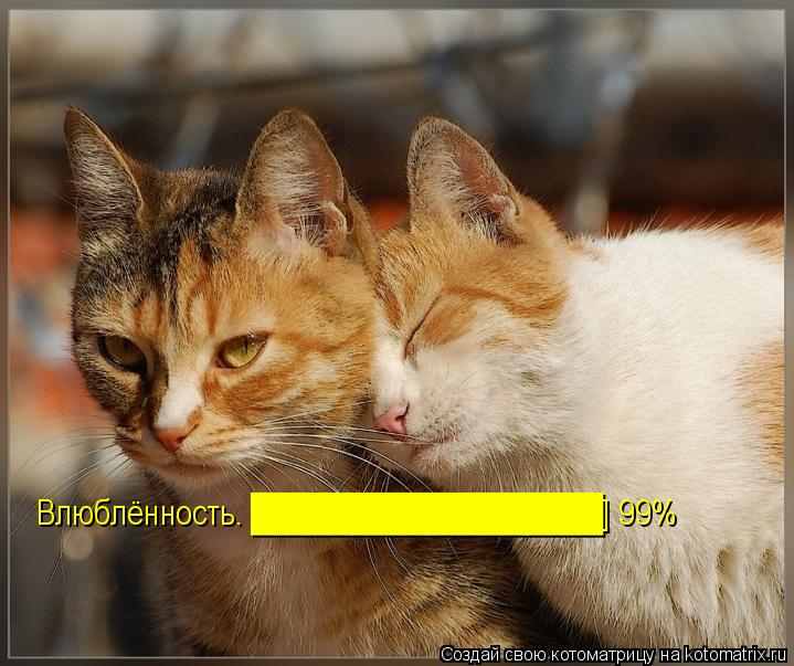 Котоматрица: Влюблённость… ██████████████] 99%
