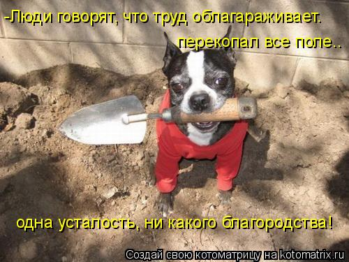 Котоматрица: -Люди говорят, что труд облагараживает. перекопал все поле.. одна усталость, ни какого благородства!