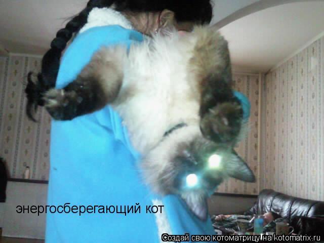 Котоматрица: энергосберегающий кот