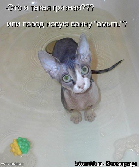 """Котоматрица: -Это я такая грязная??? или повод новую ванну """"омыть""""?"""