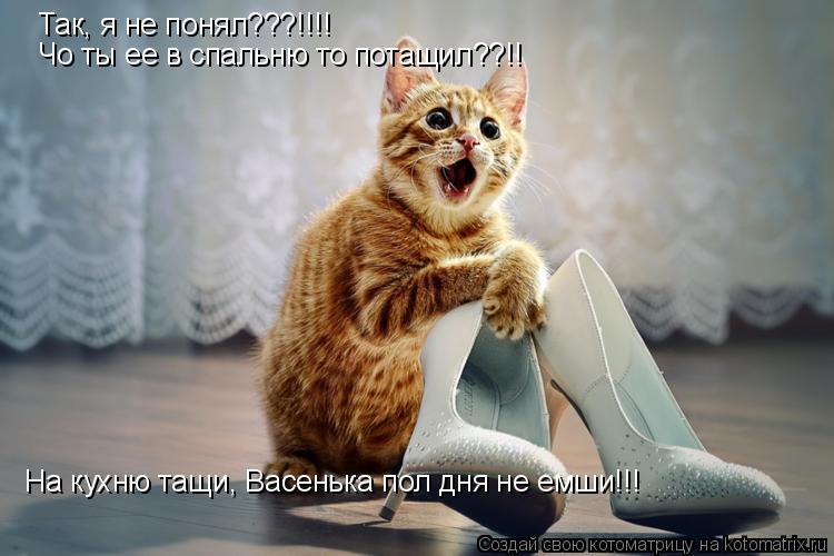 Котоматрица: Так, я не понял???!!!! Чо ты ее в спальню то потащил??!! На кухню тащи, Васенька пол дня не емши!!!