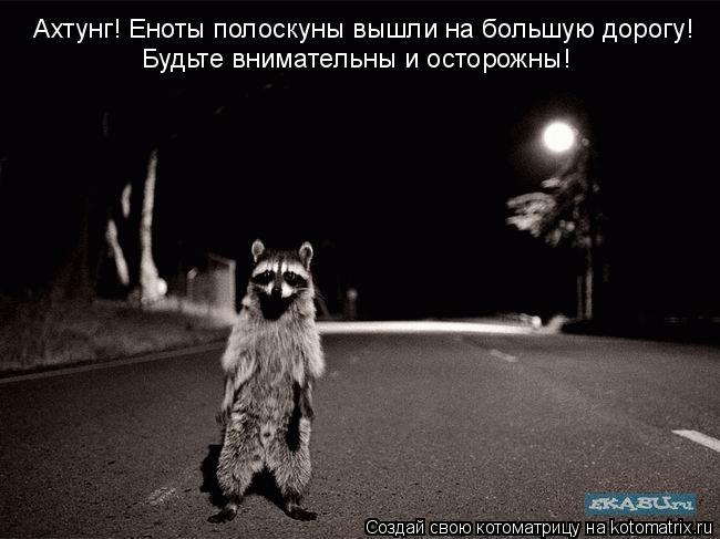 Котоматрица: Ахтунг! Еноты полоскуны вышли на большую дорогу! Будьте внимательны и осторожны!
