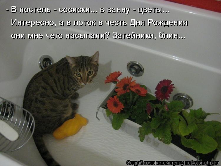Котоматрица - - В постель - сосиски... в ванну - цветы... Интересно, а в лоток в чес