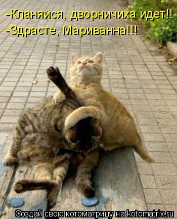 Котоматрица: -Кланяйся, дворничиха идет!! -Здрасте, Мариванна!!!