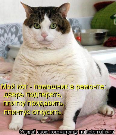 Котоматрица - Мой кот - помошник в ремонте: дверь подпереть, плитку придавить, плинт