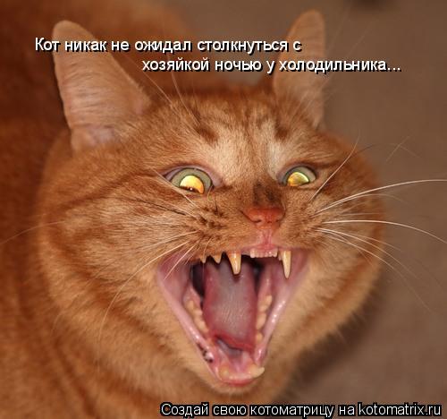 Котоматрица: Кот никак не ожидал столкнуться с  хозяйкой ночью у холодильника...