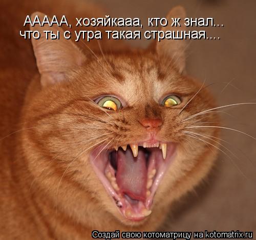 Котоматрица: ААААА, хозяйкааа, кто ж знал... что ты с утра такая страшная....