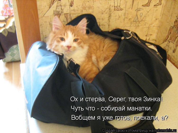 Котоматрица: Вобщем я уже готов, поехали, а? Ох и стерва, Серег, твоя Зинка! Чуть что - собирай манатки.