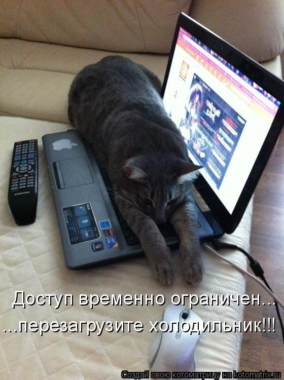 Котоматрица - Доступ временно ограничен... ...перезагрузите холодильник!!!