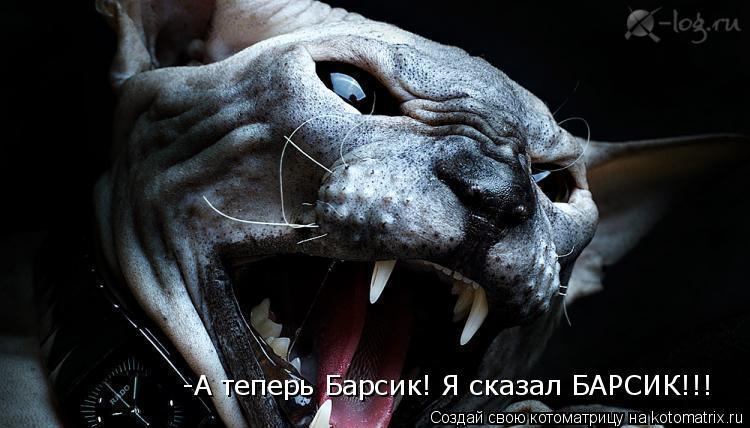 Котоматрица: -А теперь Барсик! Я сказал БАРСИК!!!