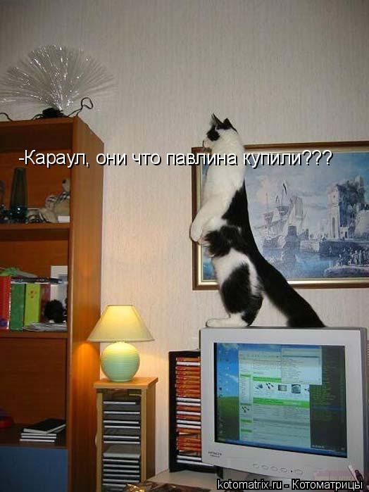 Котоматрица: -Караул, они что павлина купили???