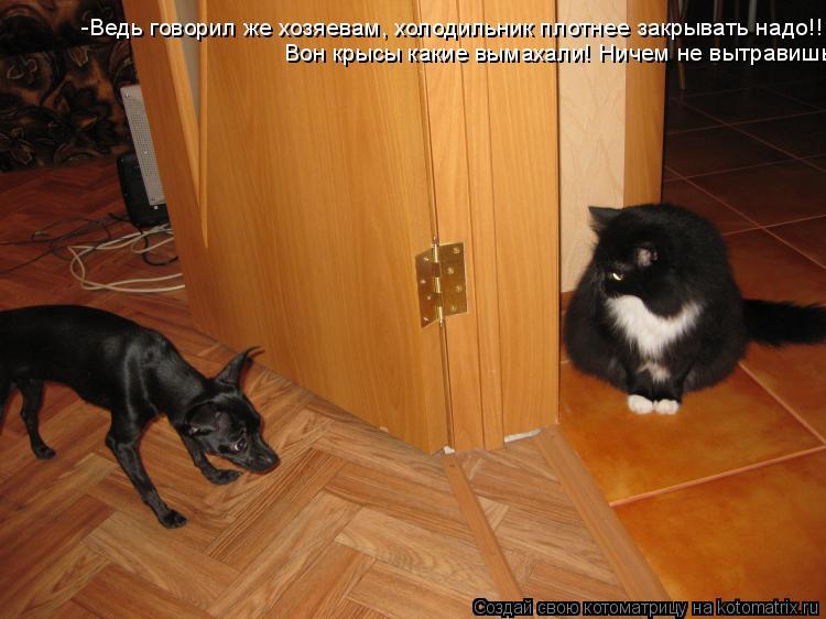 Котоматрица: -Ведь говорил же хозяевам, холодильник плотнее закрывать надо!!! Вон крысы какие вымахали! Ничем не вытравишь!