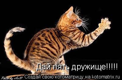 Котоматрица: Дай пять дружище!!!!!