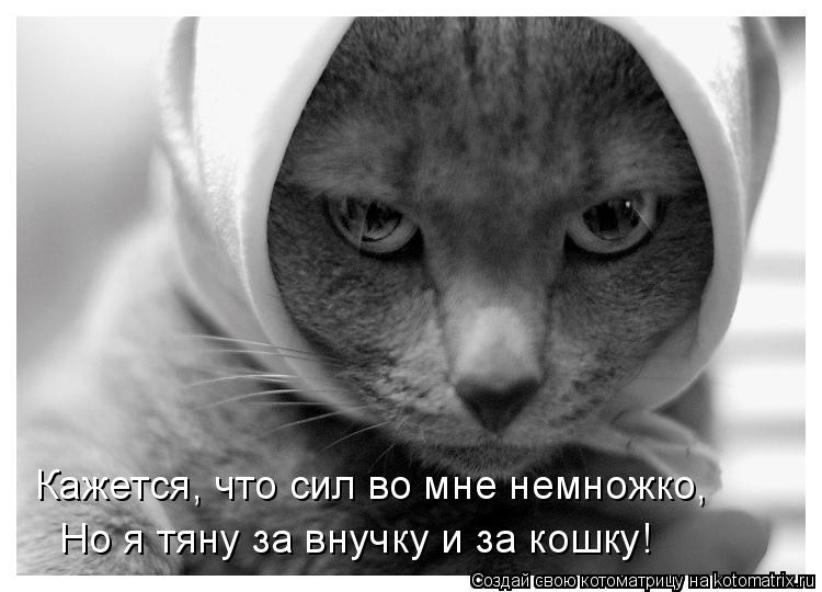 Котоматрица: Кажется, что сил во мне немножко, Но я тяну за внучку и за кошку!