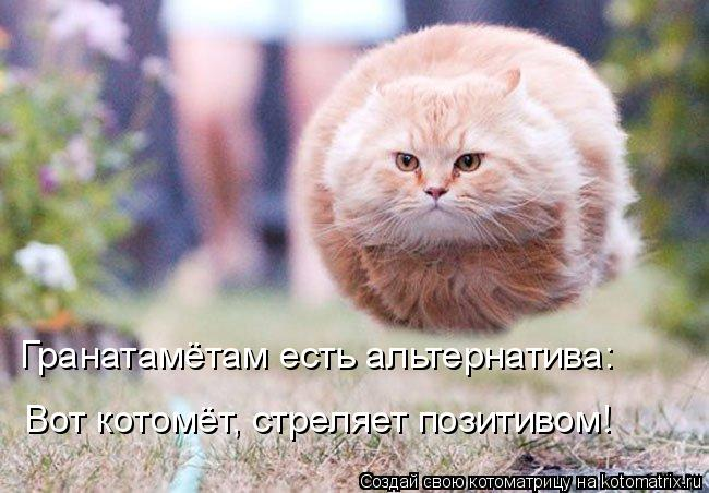 Котоматрица: Гранатамётам есть альтернатива: Вот котомёт, стреляет позитивом!