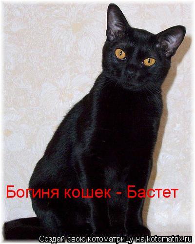 Котоматрица: Богиня кошек - Бастет