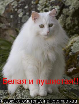 Котоматрица: Белая и пушистая!!!