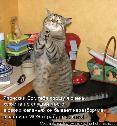 Котоматрица: Японский Бог, тебя прошу я очень, хозяина не слушай моего, в своих желаньях он бывает неразборчив, а задница МОЯ страдает за него!