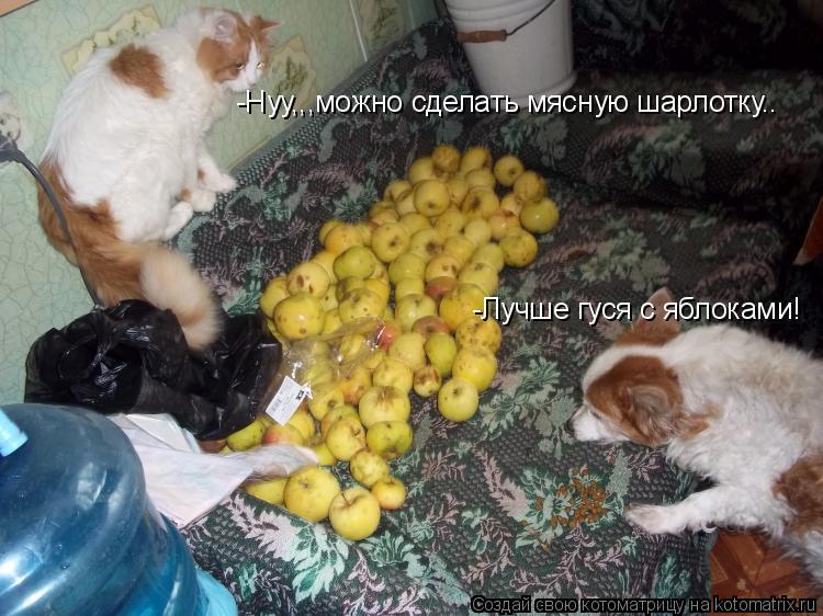 Котоматрица: -Нуу,,,можно сделать мясную шарлотку.. -Лучше гуся с яблоками!