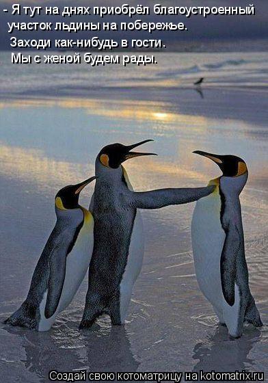 Котоматрица: участок льдины на побережье.  Заходи как-нибудь в гости.  Мы с женой будем рады. - Я тут на днях приобрёл благоустроенный