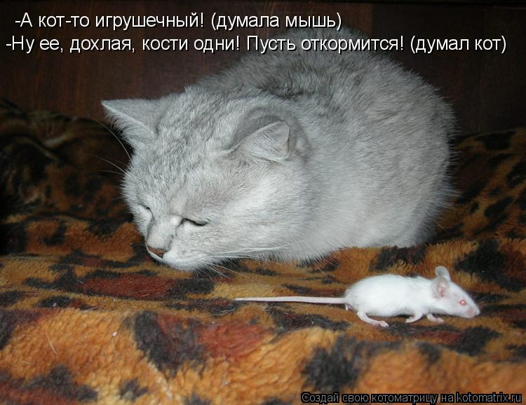 Котоматрица: -А кот-то игрушечный! (думала мышь) -Ну ее, дохлая, кости одни! Пусть откормится! (думал кот)