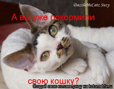 Котоматрица: А вы уже покормили свою кошку?