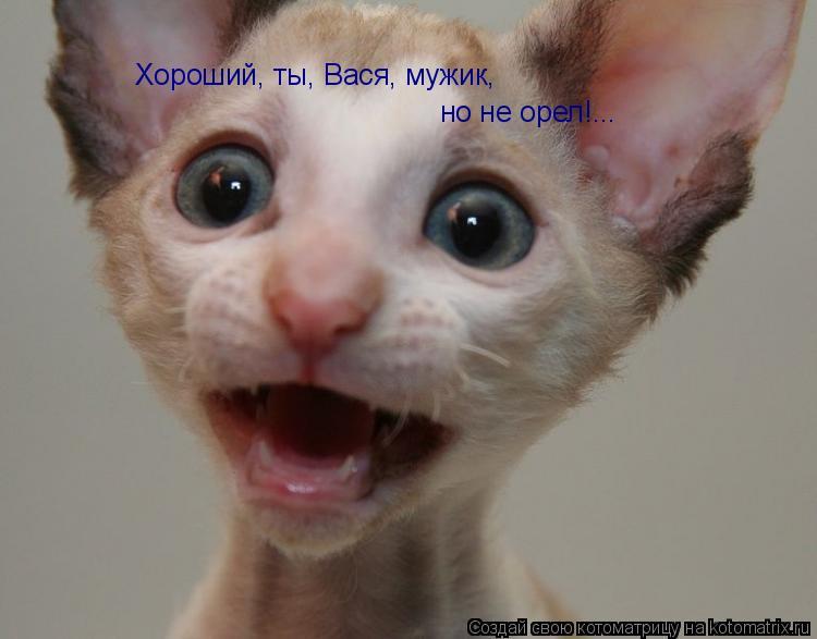 Котоматрица: Хороший, ты, Вася, мужик, но не орел!...