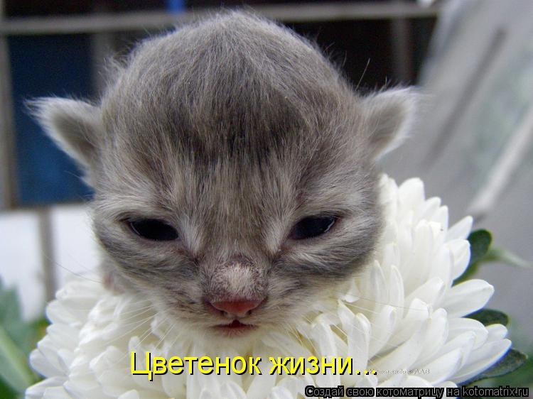 Котоматрица - Цветенок жизни...
