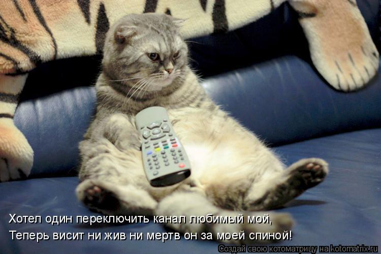 Котоматрица: Хотел один переключить канал любимый мой, Теперь висит ни жив ни мертв он за моей спиной!