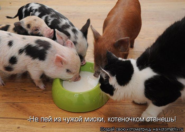 Котоматрица: -Не пей из чужой миски, котеночком станешь!