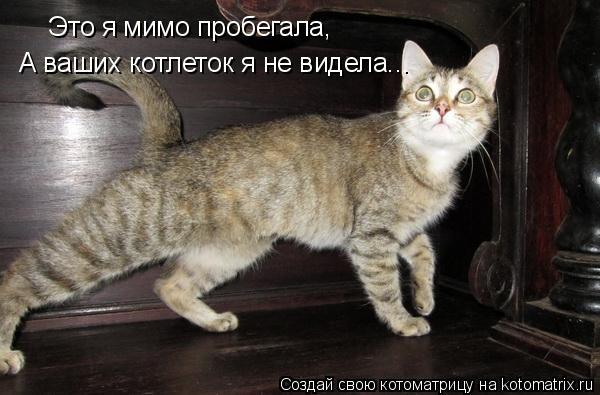 Котоматрица: Это я мимо пробегала, А ваших котлеток я не видела...